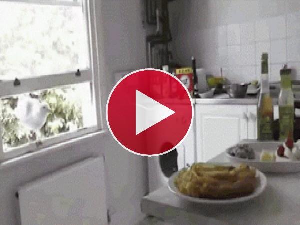 Una intrusa en mi cocina