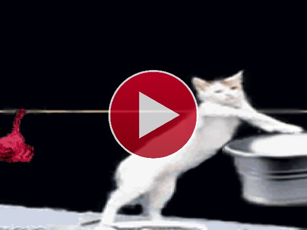 Un gato haciendo la colada