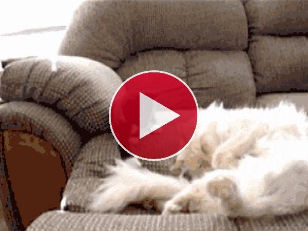 GIF: Un gatito muy juguetón