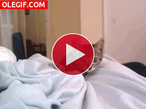Un gatito se acerca