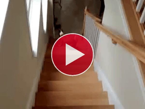 GIF: Este perro sube las escaleras de culo