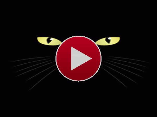 Un gato negro lamiendo la pantalla