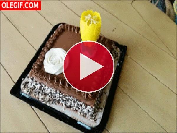Bonita vela sobre una tarta de cumpleaños