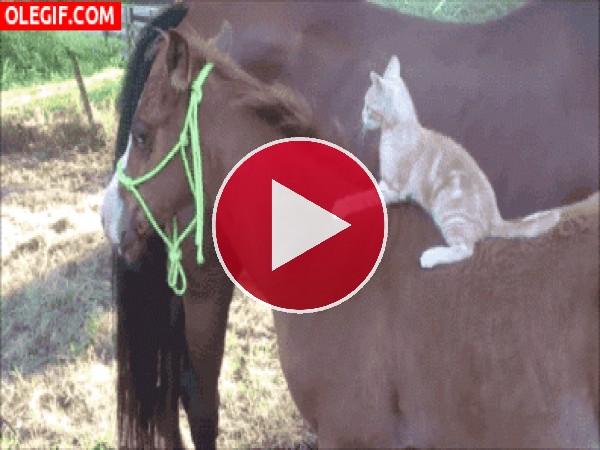 GIF: Mira a este gato cómo muerde al caballo