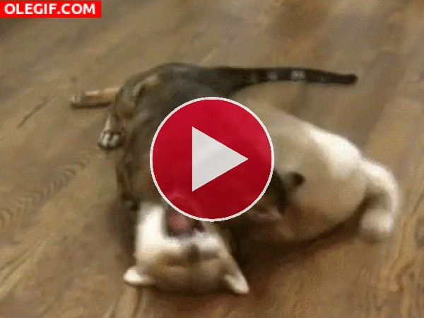 GIF: Gato atacando al perro