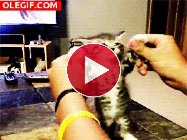 GIF: ¡Qué gato tan gracioso!