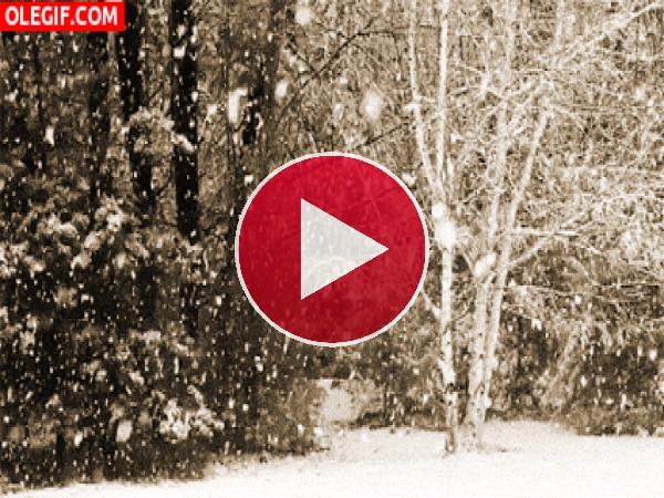 GIF: Nevando en el bosque