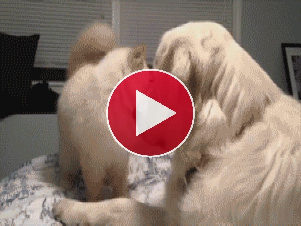 GIF: ¡Fuera de mi cama!