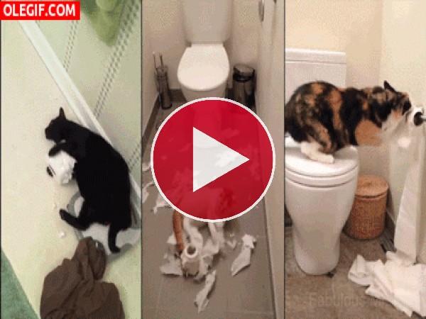 La que están liando estos gatos