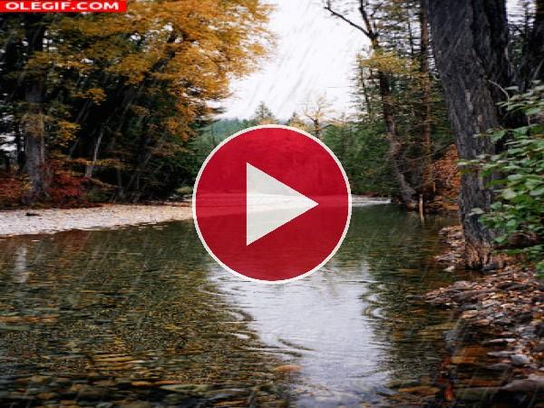 GIF: Lluvia cayendo en otoño