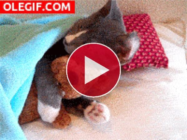 GIF: Mira a este gato abrazando al peluche