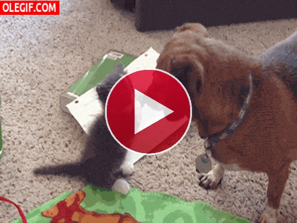 Gatito tocando el hocico del perro