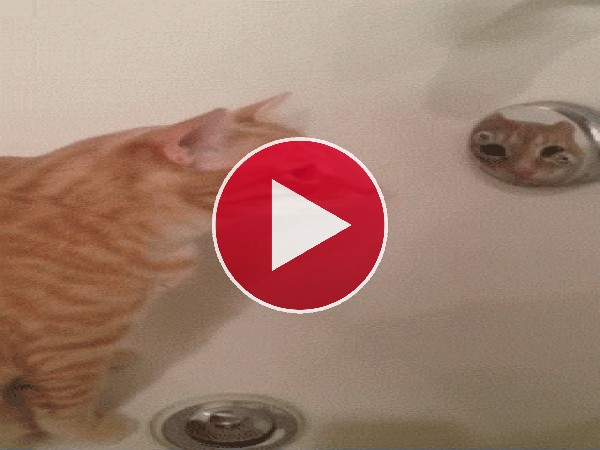 Este gato alucina con su reflejo
