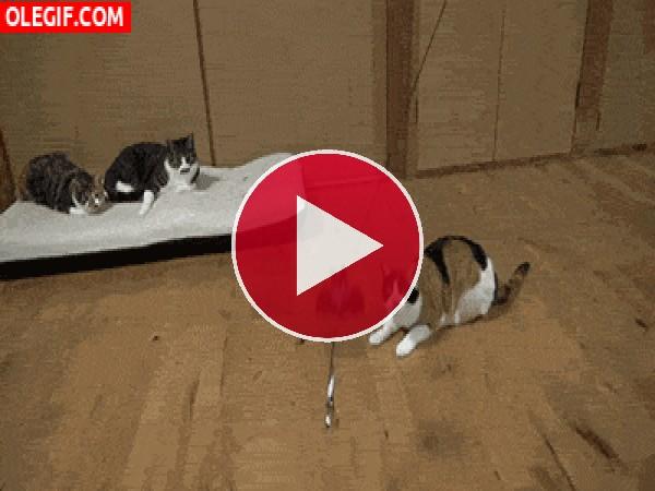 Este gato da un gran salto