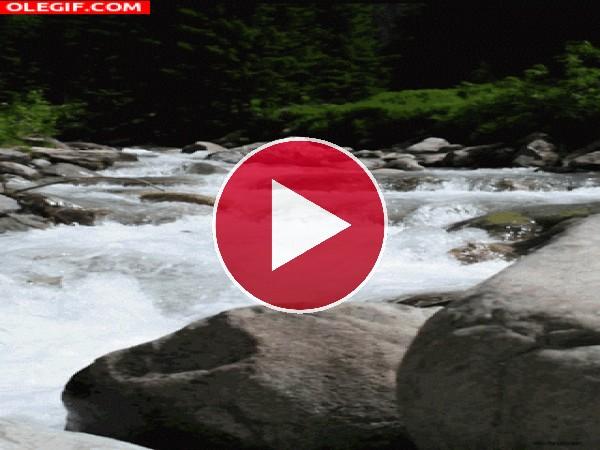 Río fluyendo en plena naturaleza