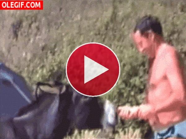 GIF: Menudo mordisco le dio el burro