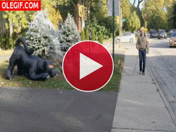 GIF: Un perro muy asustadizo