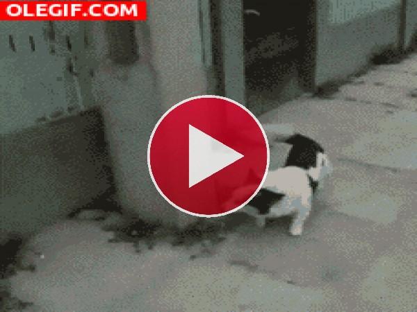 GIF: Mira cómo escala este perro
