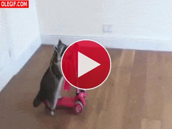 Mira a este mapache montando en patinete