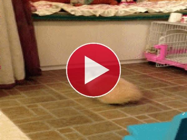 GIF: Mira a este bonito conejo