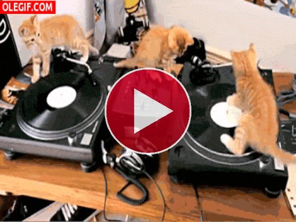 GIF: A estos gatos les gusta la música