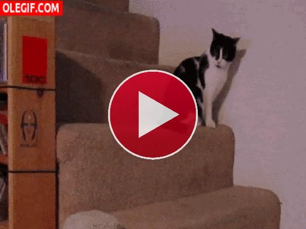 Mira a este gato cayendo del escalón
