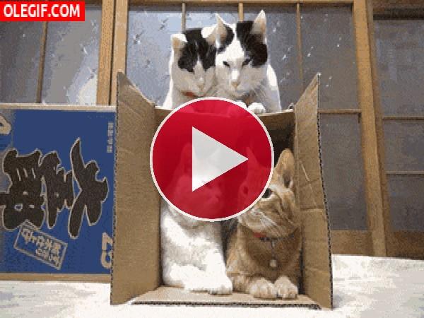 GIF: Una caja muy concurrida