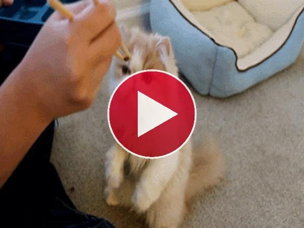 A este gato le gusta que le den de comer con palillos
