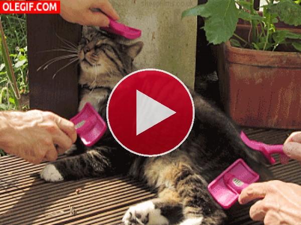 GIF: A este gato le encanta que le peinen