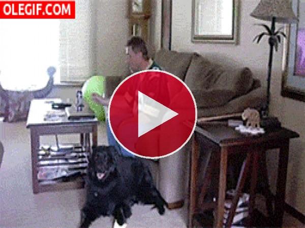 Un perro muy obediente y un dueño muy vago