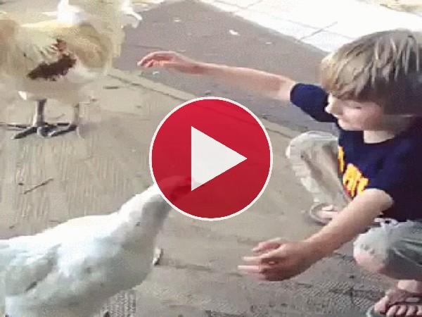 Mira a este niño abrazando a la gallina