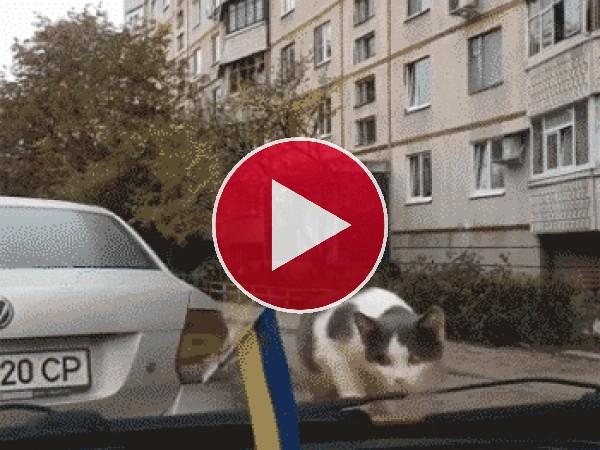GIF: Este gato es muy asustadizo