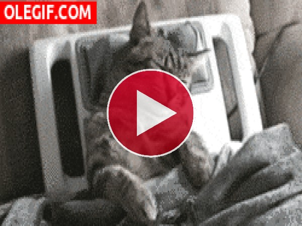 A este gato le relaja el masaje