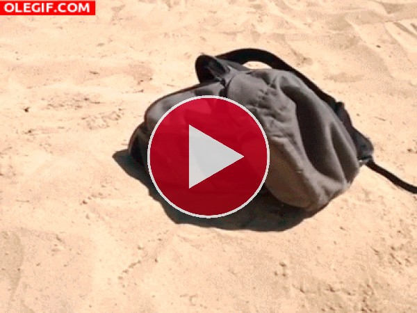 Cabeza saliendo de una mochila