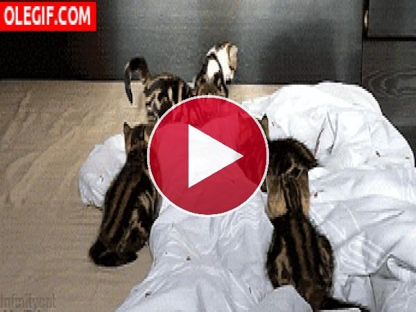 GIF: Mira a este gatito corriendo entre sus hermanos