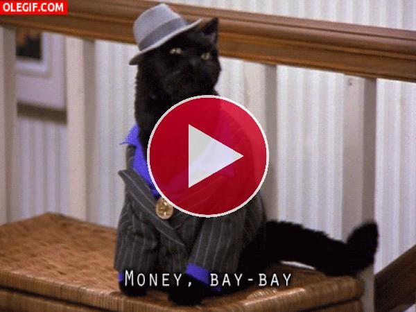 GIF: Un gato parlante