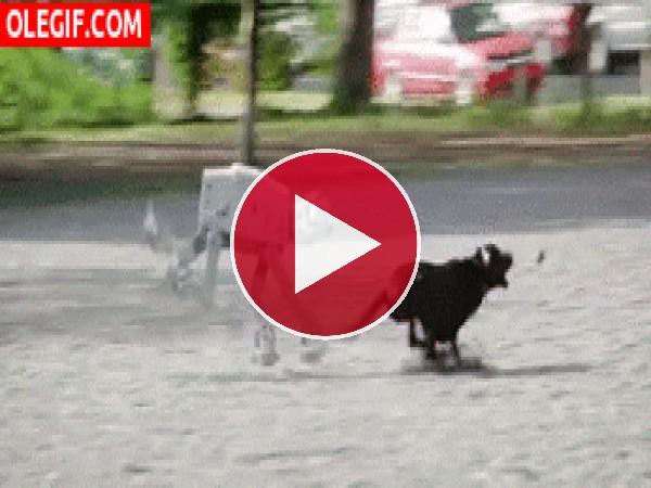 GIF: Recogiendo la caca de mi perro-robot