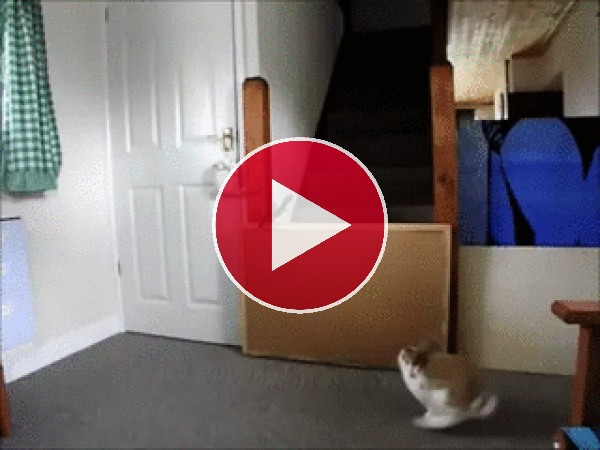 Vaya salto pega este conejo