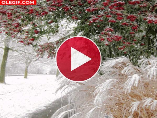 Copos de nieve cayendo en la naturaleza