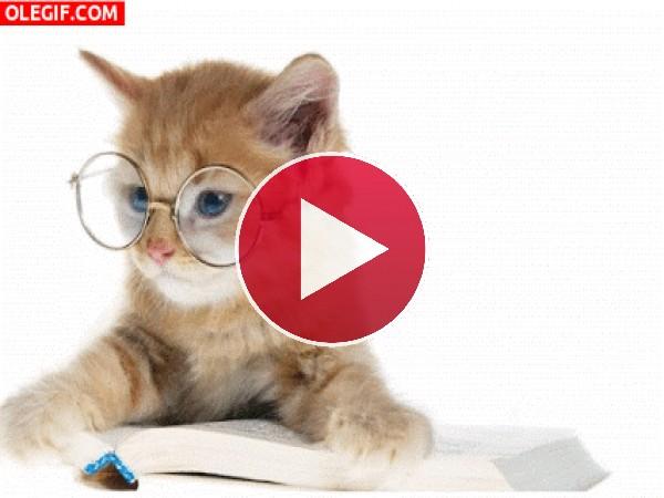 GIF: Un gato muy estudioso