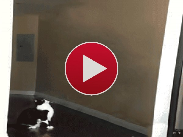 GIF: A este gato le han abducido unos alienígenas