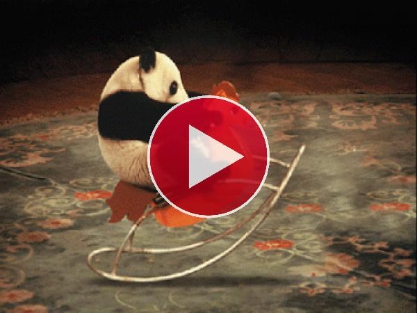GIF: A este panda le gusta balancearse en el caballito