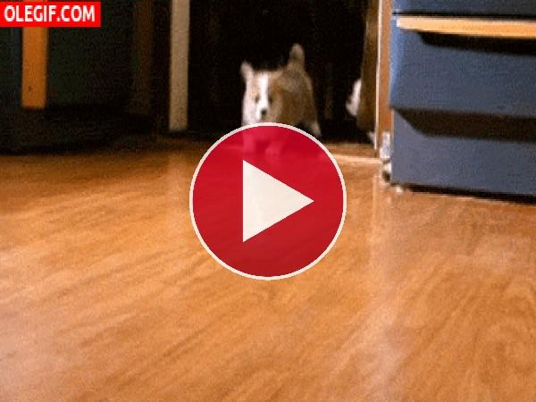 GIF: Cachorros echando una carrera