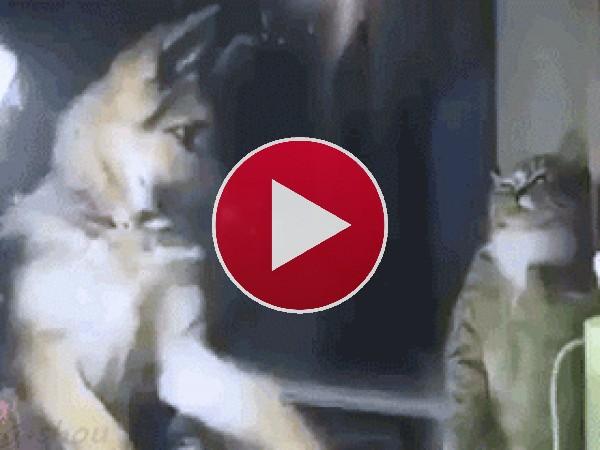 GIF: Como el perro y el gato