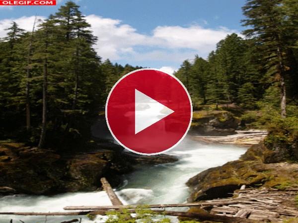 GIF: Río en plena naturaleza