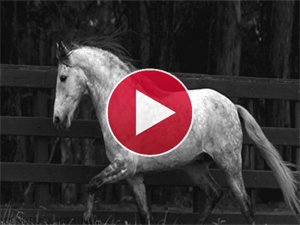 Un caballo moviendo la melena
