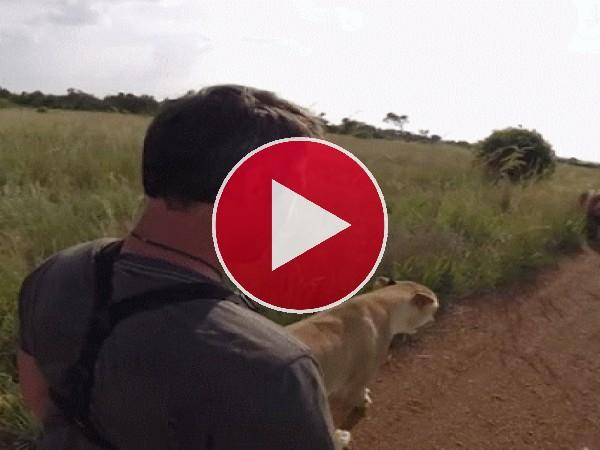 GIF: Abrazando al león