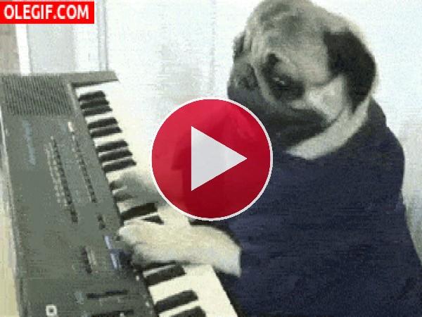 GIF: El perro pianista