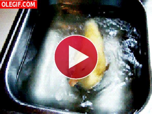 Patito nadando en el fregadero