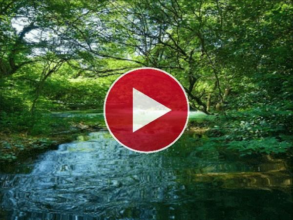 GIF: Calma en el cauce de un río